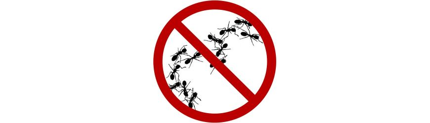 Eliminieren Ameisen online