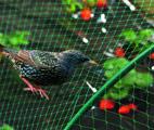 comprar redes para Pássaros